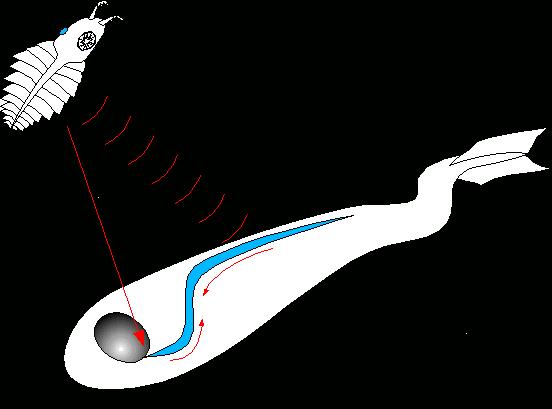 invertedbrain